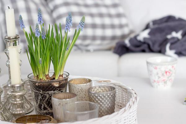 Frühlingshafte Dekoration mit Blumen in unserem Wohnzimmer. Farrow & Ball England in der Farbe Lamp Room Gray No. 88 an den Wänden