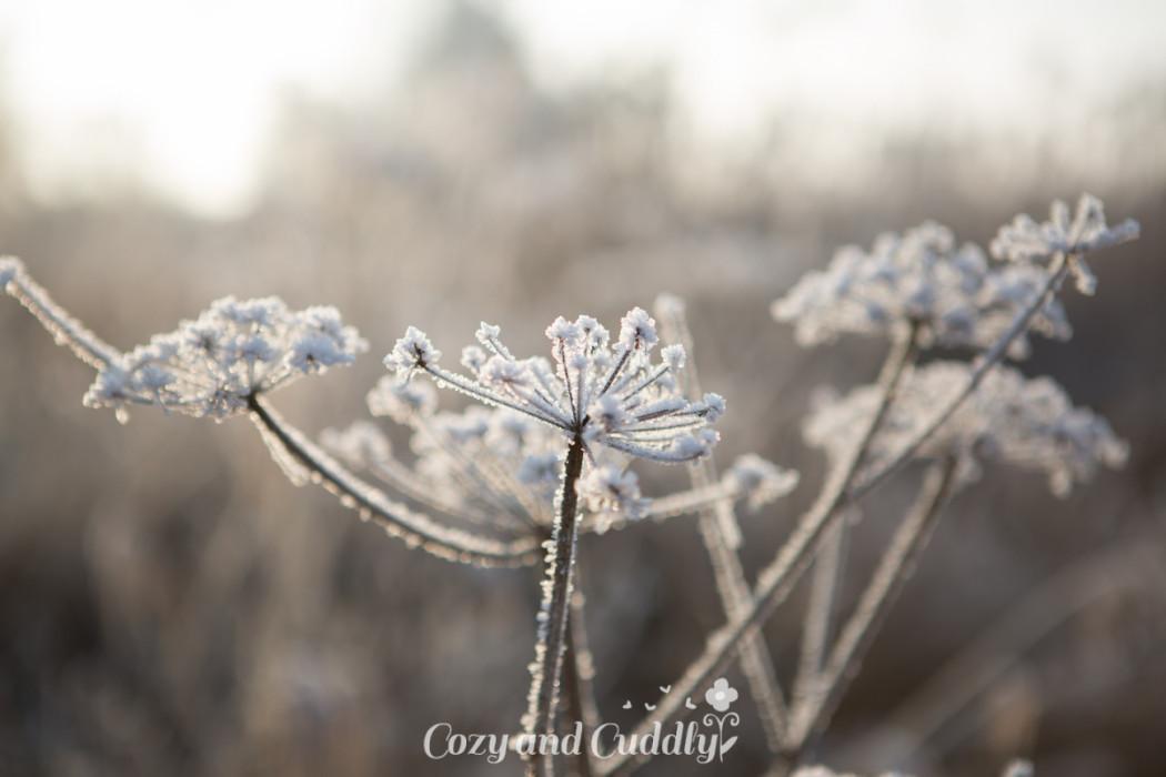 Winterzauber - Winterfotografie